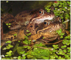 Toads and frogs visit and live